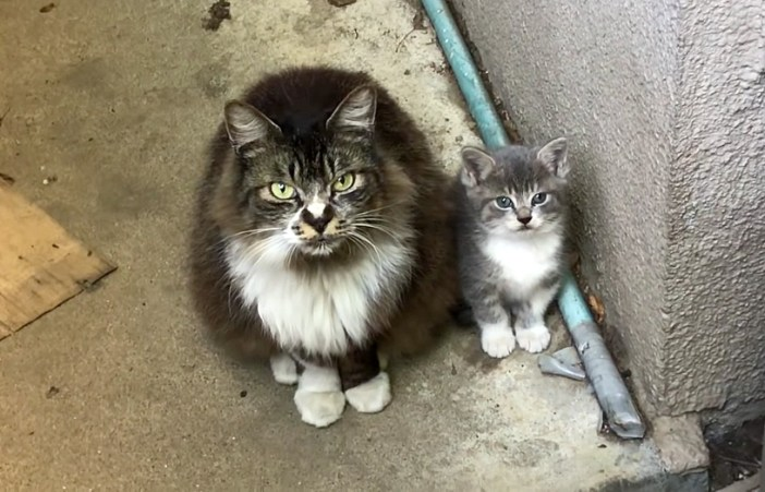 見上げる母猫と子猫