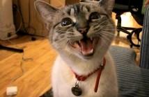 遠吠えする猫