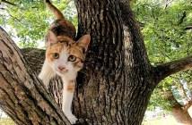 木から降りてくる猫