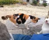 猫島で座ったら、あっという間に猫達に取り囲まれた! 人懐っこい猫達が次々と寄り添ってきて、まるでパラダイス状態に♪
