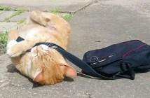 抵抗する猫