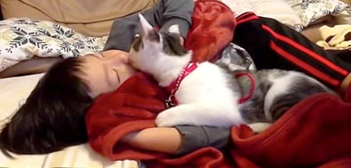 大好きな男の子が寝ていると、いつも寄り添ってくる猫さん。男の子を幸せいっぱいに毛づくろいする姿に心が温まる♡