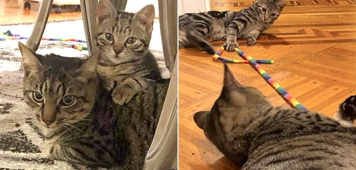 仲良くなった猫と子猫
