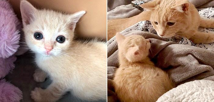 保護子猫と先住猫