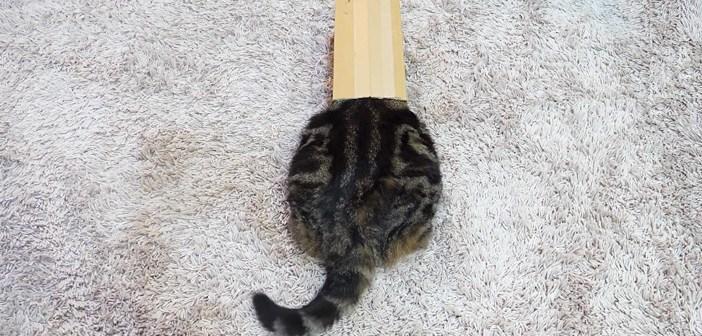 『正しい箱の入り方』を同居猫に教える猫さん。見事な箱マイスターぶりを発揮するも、同居猫からは微妙な反応が ( *´艸`)