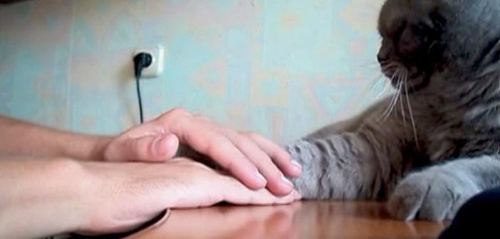 手の上に前足を乗せたい猫