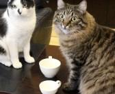 市役所で自由気ままに暮らす保護猫達。生中継の市長会見に現れて、みんなの視線を釘づけに ( *´艸`)♡