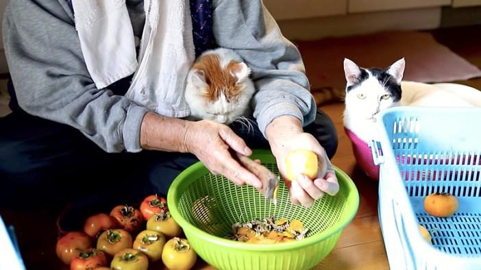 柿剥きと猫