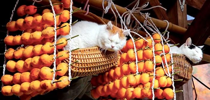 干し柿と猫