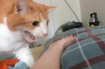 起こしに来た猫