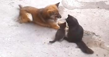 猫と親友の犬