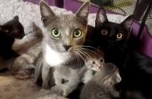 仲良くなった2匹の母猫