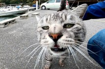 ゴロゴロ猫