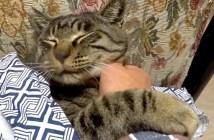 腕にしがみつく猫