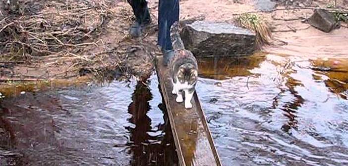 水たまりを見つけた猫