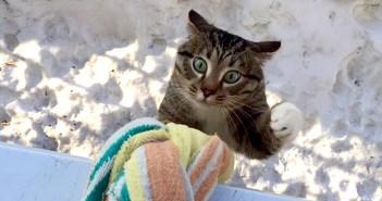 登ってくる猫