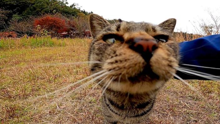 近づいてきた猫