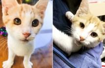 怪我から回復した子猫