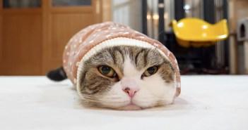 袖に入る猫