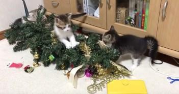 クリスマスツリーと子猫達