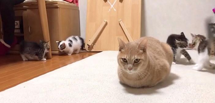 暴れる子猫達