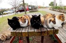 集まる猫達