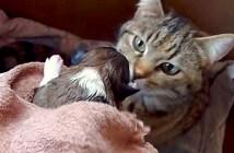 子犬を受け入れる母猫