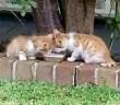 目の見えない子猫達