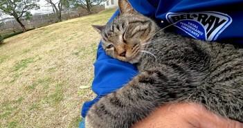 膝の上で甘える猫