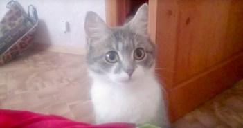子猫を見せたい母猫