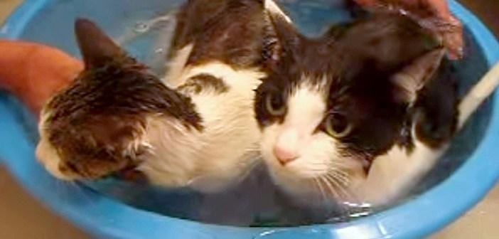お風呂に入る猫の親子