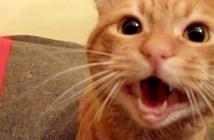 飼い主さんと再会した猫さん