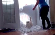 雪の壁と猫
