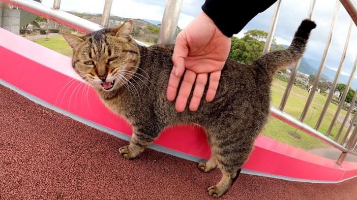 展望台に登る猫