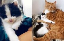 仲良くなった猫達