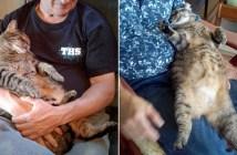 お父さん好きの猫