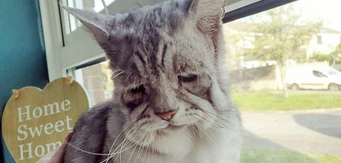 非常に稀な病気の猫