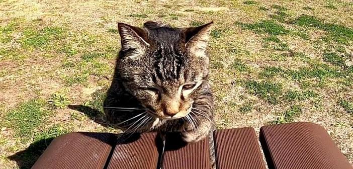 ベンチに乗ってくる猫