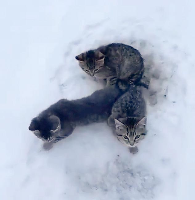 雪の中の子猫達