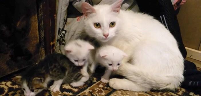 見知らぬ猫と猫達