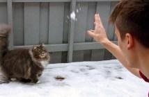 雪遊びする猫