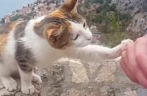 水が飲みたい猫