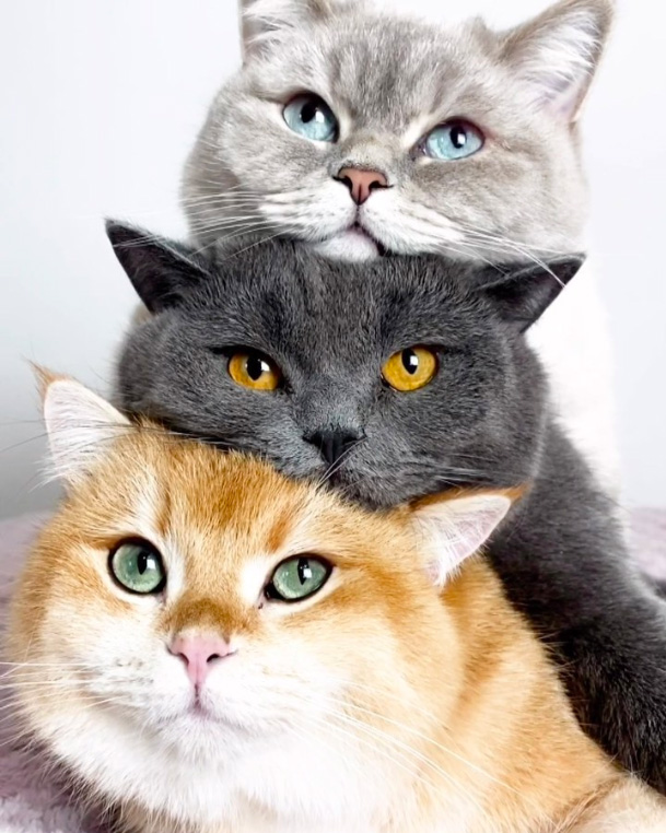 3段重ねの猫達