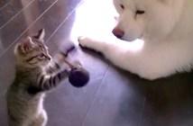 秋田犬と子猫
