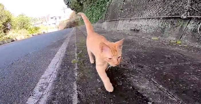 どこまでもついてくる子猫