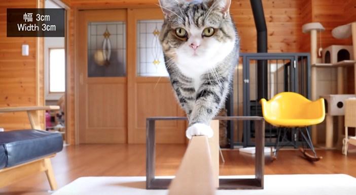 平均台を歩く猫