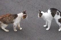 友達になる猫