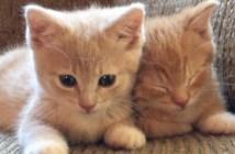 強い眠気に襲われる子猫達