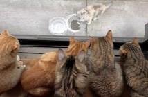 家猫達に見つめられる子猫