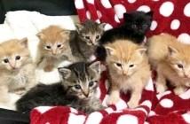 保護された7匹の子猫達